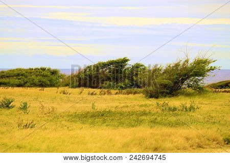 Windswept Landscape Including Trees Shaped From The Wind And Grasslands With The Pacific Ocean Beyon