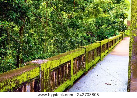 Bridge Including A Pedestrian Walkway Covered In Moss Over The Wailuku River Surrounded By A Lush Gr