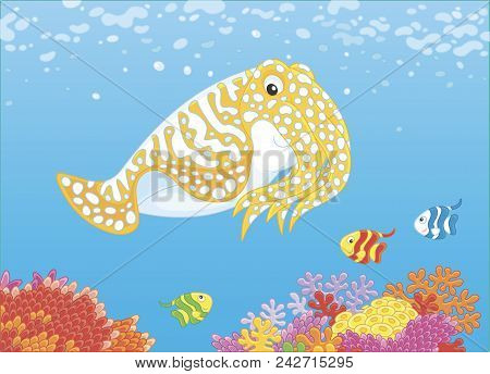Cuttlefish And Small Butterfyfishes Swimming Over Colorful Corals On A Reef In A Tropical Sea, Vecto