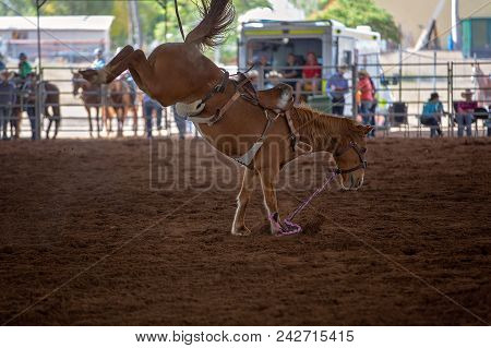 Riderless Bucking Bronco Horse At Indoor Country Rodeo