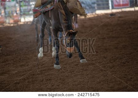Bucking Bronco Horse With Cowboy Rider At Indoor Country Rodeo