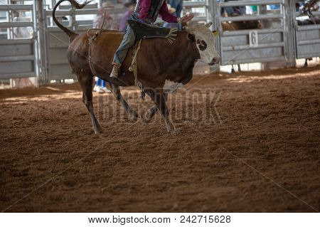 Cowboy Riding A Bucking Bull At An Indoor Country Rodeo