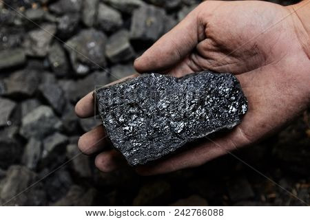 Coal Miner In The Man Hands Of Coal Background. Coal Mining Or Energy Source, Environment Protection