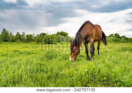 Brown Horse Grazing In A Meadow, Beautiful Rural Landscape With Cloudy Sky. Stories About Rural Life