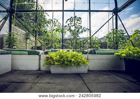 Green Plants In A Small Greenhouse In A Garden With Blue Sky In The Background