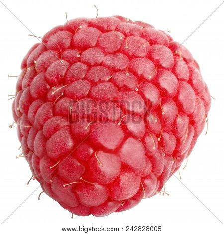 Isolated Berries. One Whole Raspberry Isolated On White Background With Clipping Path As Package Des