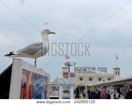 BRIGHTON - MAY 24, 2018: Seagulls and tourists on Brighton Pier in Brighton, East Sussex, UK.