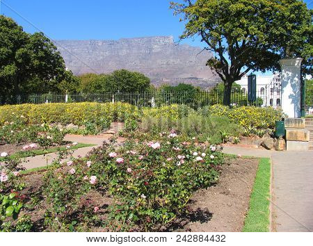 Garden Landscape,  Bushes, Trees And Other Vegetation Directly Behind A Rose Garden In The Fore Grou
