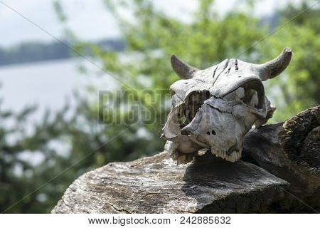 The Skull Of A Dead Animal Lies On A Decrepit Fallen Stump Against A Blue Lake And The Young Green O