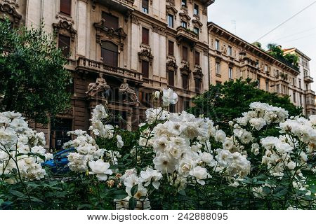 White Flowers On The Foreground Of Art Nouveau Architecture In Milan's Porta Venezia District, Lomba