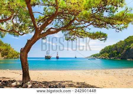 Beautiful Beach With Turquoise Water And Pines.