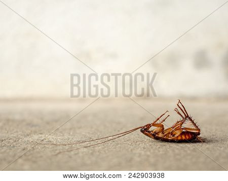 Dead Cockroach On Floor With Copy Sapce. Pest Control, Health And Hygiene Concept