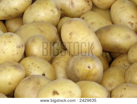 Yellowpotatos121407