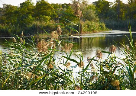 Rushy River Anapka.