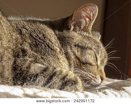 A Female Cat Sleeping Comfortably On A Comforter
