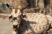 White cow decorated with paint and tinsel. Chittaugarh Rajasthan India poster