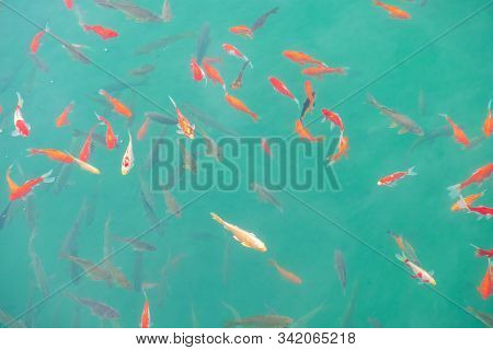 Fishes Swimming In Black Dragon Pool, Landmark And Popular Spot For Tourists Attractions Near Lijian