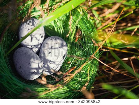 Bird Nest Hidden In A High Green Grass With Three Eggs. Concept Of Family, Cozy, Loving, Protection,