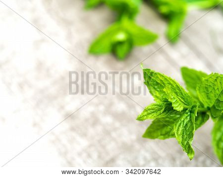 Harvesting Fresh Mint Leaves In The Garden. Peppermint Sprig On Rustic Weathered Wooden Table. Harve
