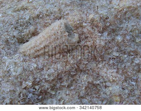 Dry Corncob On A Melted Dry Corncob