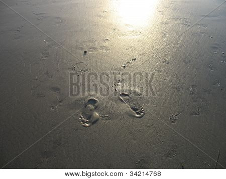 Lone Set of Footprints in the Sand