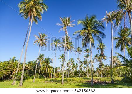 Beautiful View Of The Exotic Resort, Seychelles, Palm Trees And Green Grass
