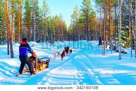 Woman At Husky Dogs Sled In Rovaniemi Of Finland Lapland Reflex