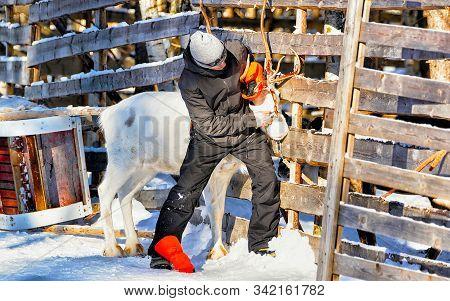 Man With Reindeer In Winter Rovaniemi Finland Reflex