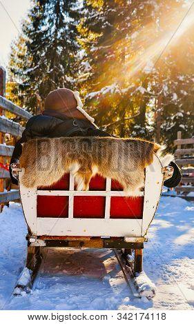 Man At Reindeer Sledge Ride In Winter Rovaniemi Northern Finland Reflex