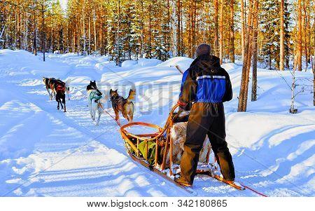 Man Riding Husky Sledge In Lapland Finland Reflex