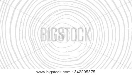Wood Material Surface Tree Age Rings Texture. Wooden Rings Surface. 4k Rings Background. Vintage Eff