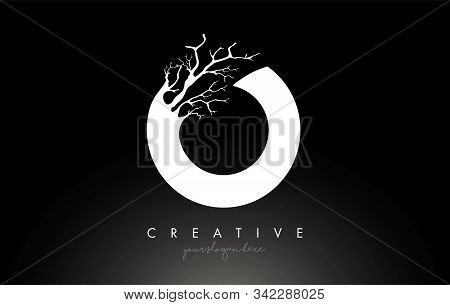 Letter O Design Logo With Creative Tree Branch. O Letter Tree Icon Logo  Vector Illustration.