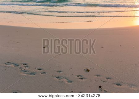 Human And Dog Footprints At The Beach. Sunrise Colors, Friendship