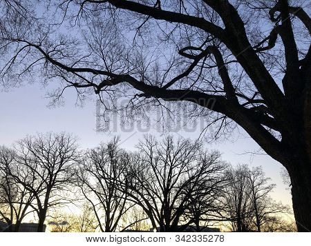 Silhouette And Sunset In The Winter Trees