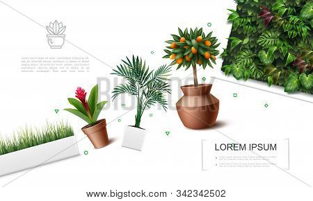 Realistic Beautiful Plants Template With Red Ginger Flower Palm Leaves Kumquat Tree Grass In Flowerp