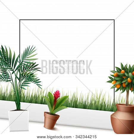 Beautiful Home Plants Colorful Template With Frame For Text Palm Leaves Red Ginger Flower Kumquat Tr