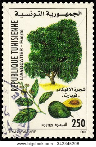 Moscow, Russia - December 30, 2019: Stamp Printed In Tunisia Shows Avocado Tree (persea Americana),