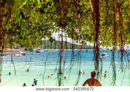 Koh Phi Phi - Thailand - November 26 2019: Roots Of A Tropical Tree Hanging Near The Beach In Phi Ph