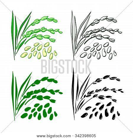 Rice Grain. Vector Set Of Plant, Spike, Leaf, Husk. Natural Organic Food. Hand Drawn Illustration On
