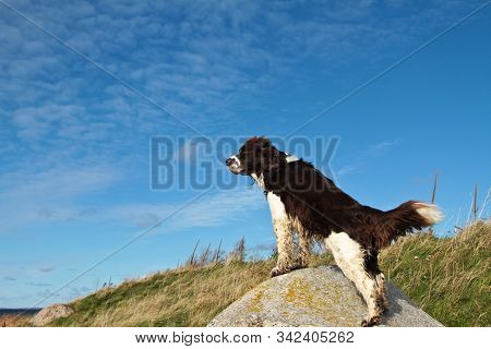 Dog Playing And Having Fun On Blue Sky Background