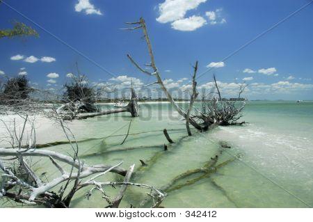 Florida Beach Scenic 4