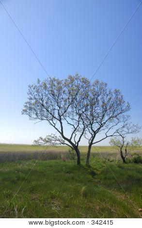 Trees On Tidal Marsh Area