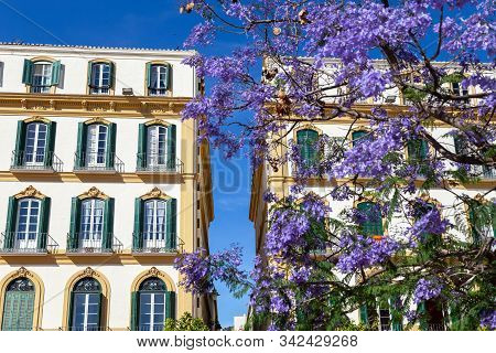 Malaga, Spain - May 23, 2019: Historic Buildings And Blooming Tree On Plaza De La Merced, One Of The