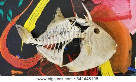 Triggerfish Skeleton On Pop Art Table Top