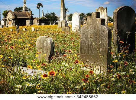 Headstones In Cemetery With Flowers And Blue Sky