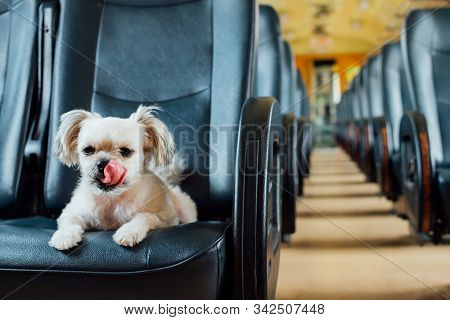 Dog So Cute Inside A Railway Train Wait For Travel