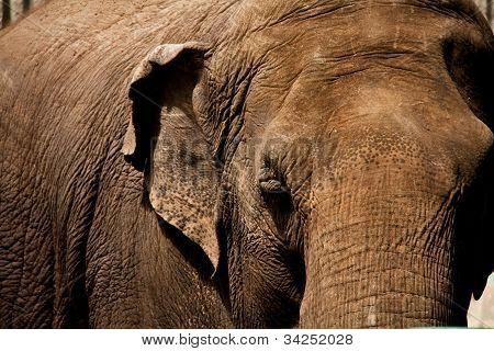 Solemn Elephant
