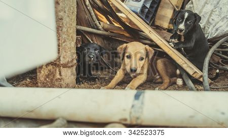 The Homeless Little Puppies In A Junkyard.