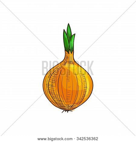 Whole Onion Bulb, Vegetable Root Isolated Sketch. Vector Raw Unpeeled Veggie With Green Leaves