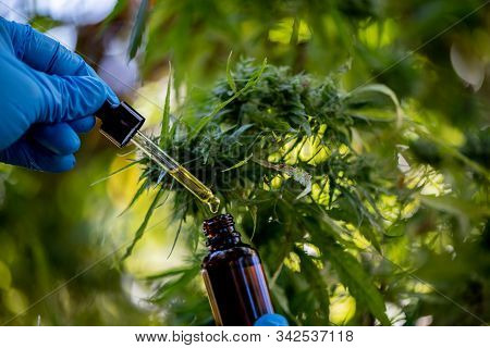 Doctors Hold A Bottle Of Medicine Dropper, Biomedical And Ecological Hemp Medicine, Medicinal Plants